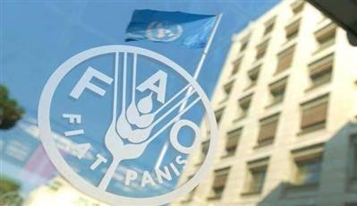 ثمانية ملايين دولار دعم ياباني لتعزيز الأمن الغذائي باليمن عبر منظمة