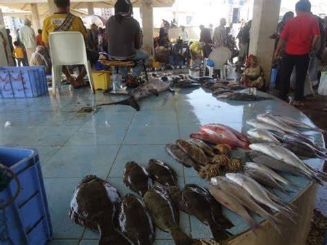 قرابة 7 مليارات ريال قيمة الإنتاج السمكي بساحل حضرموت العام الماضي