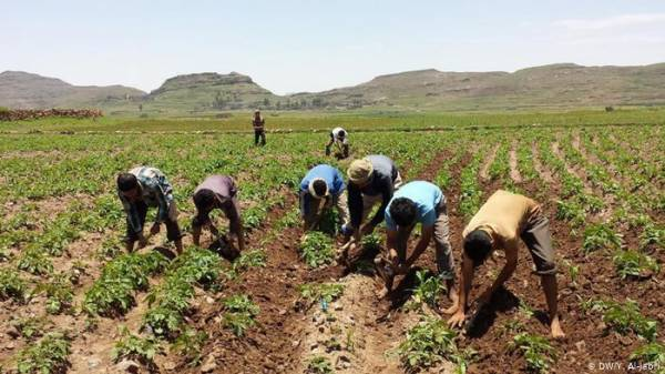 البرنامج العالمي للزراعة يمنح اليمن 20 مليون دولار