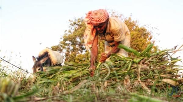 """""""حسين"""" مزارع تهامي يواجه صعوبة في إعادة مزرعته التي دمرتها المليشيات الحوثية"""